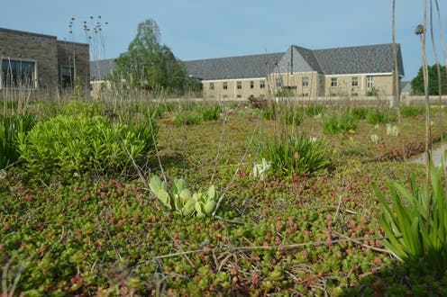Low Income Neighborhoods Would Gain The Most From Green Roofs In