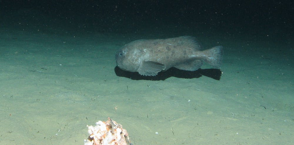 finding the deepest fish dive magazine
