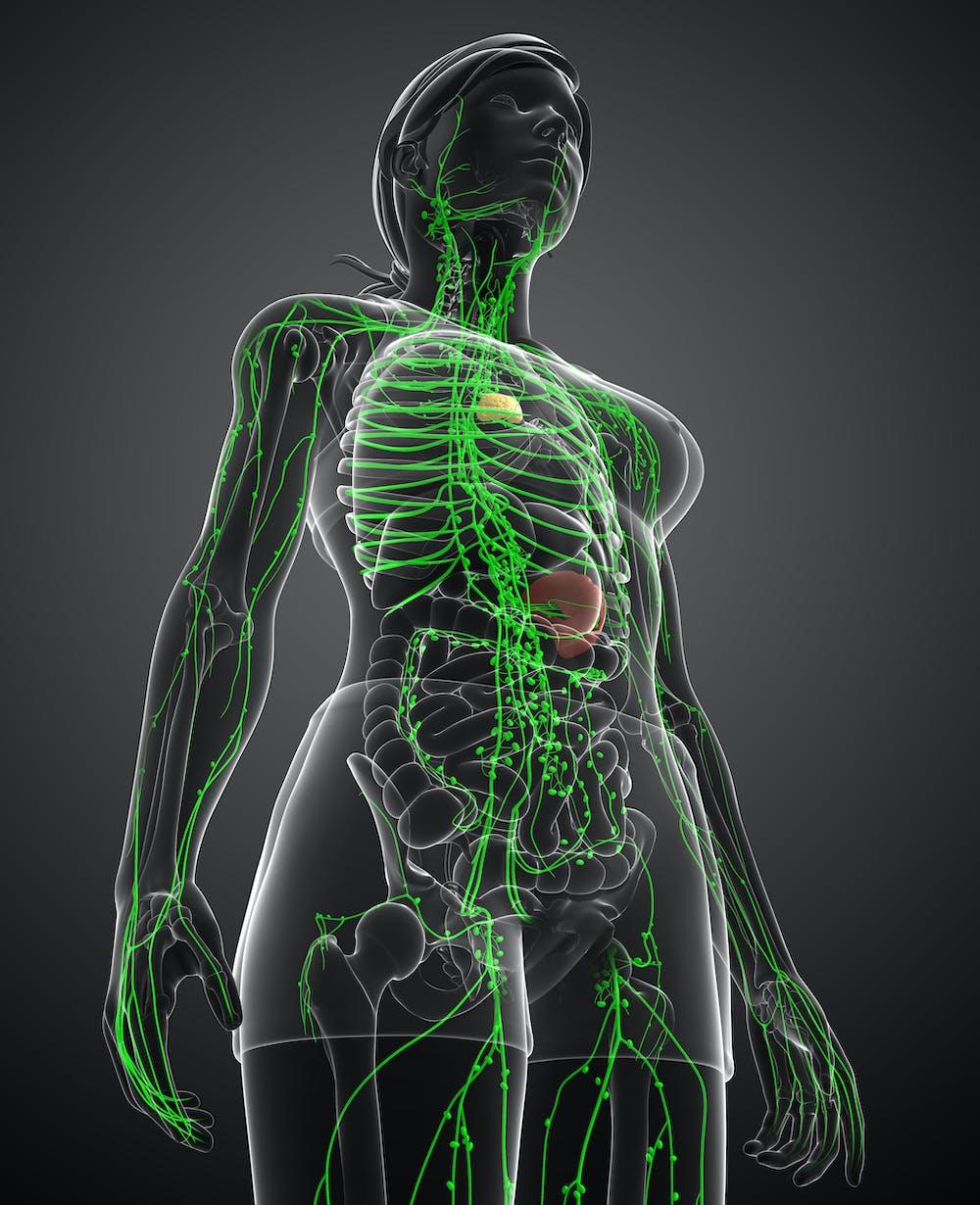 Próximo reto: Mapear los billones de células de nuestro cuerpo