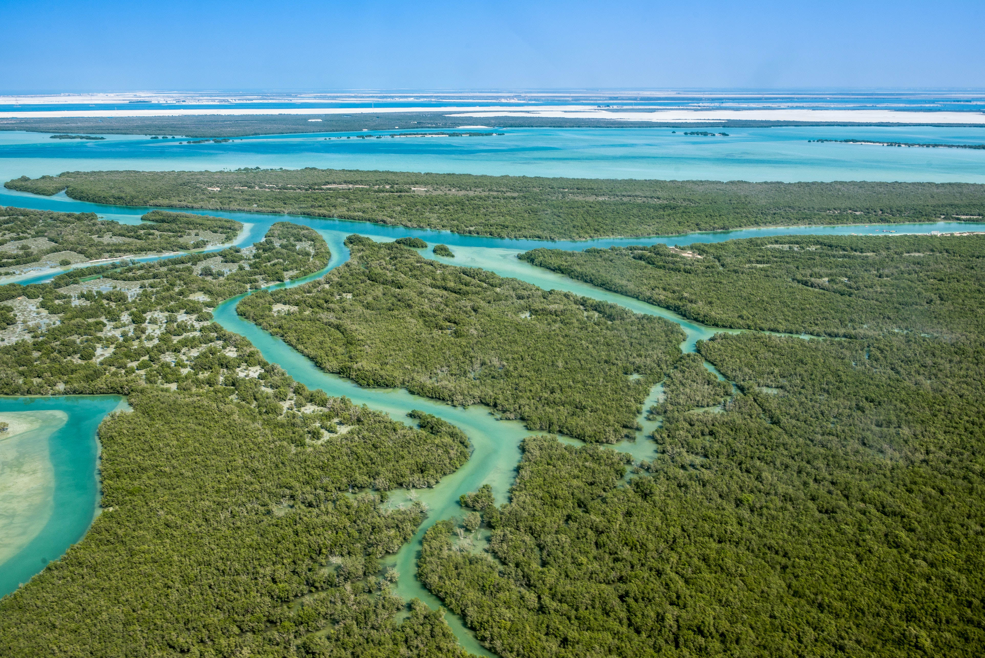 Mangrove forests can rebound thanks to climate change – it's an opportunity we must take