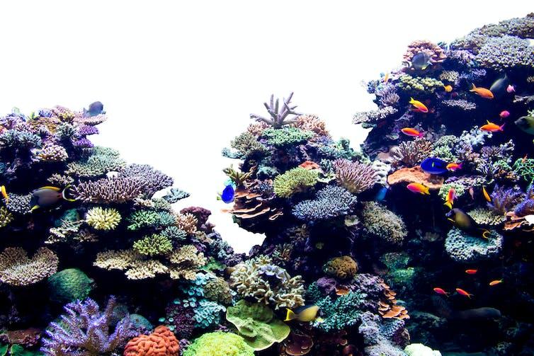 84de4907d1a Conversation: Coral reefs - Press Office - Newcastle University