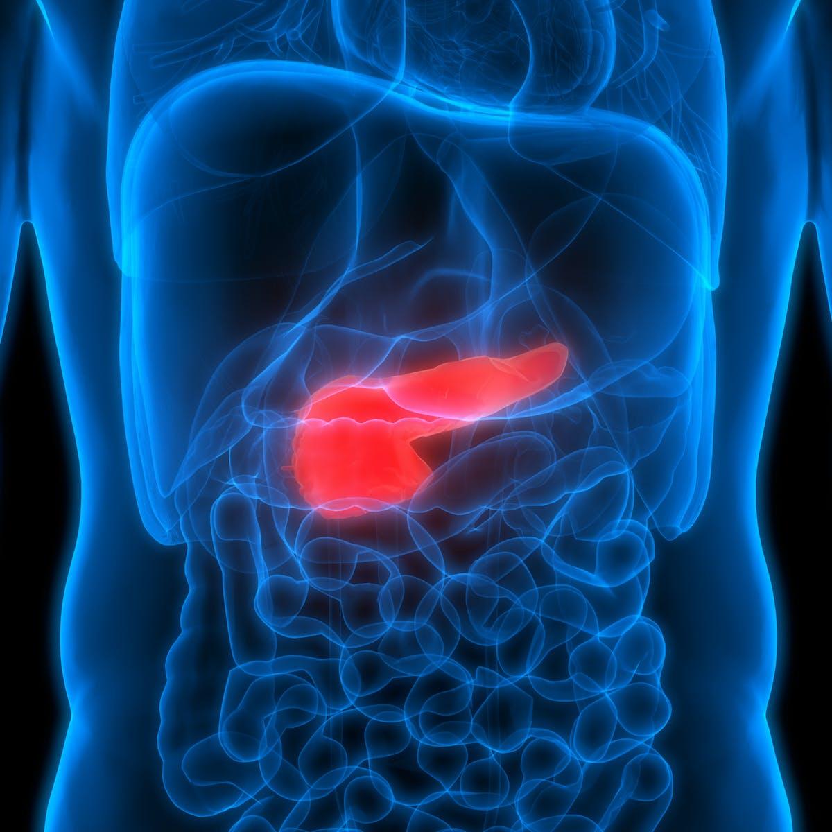diabetes tipo 1 páncreas anatomía