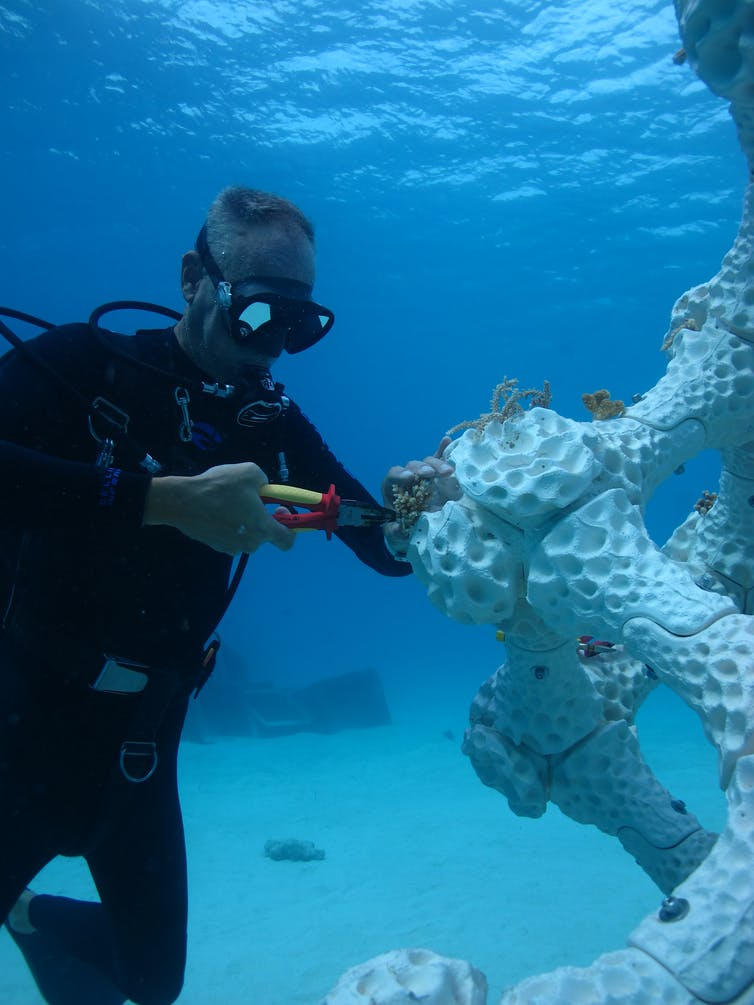 Putting 3D printed reef into place in the Maldives. Photo credit: Alex Goad/Reef Design Lab