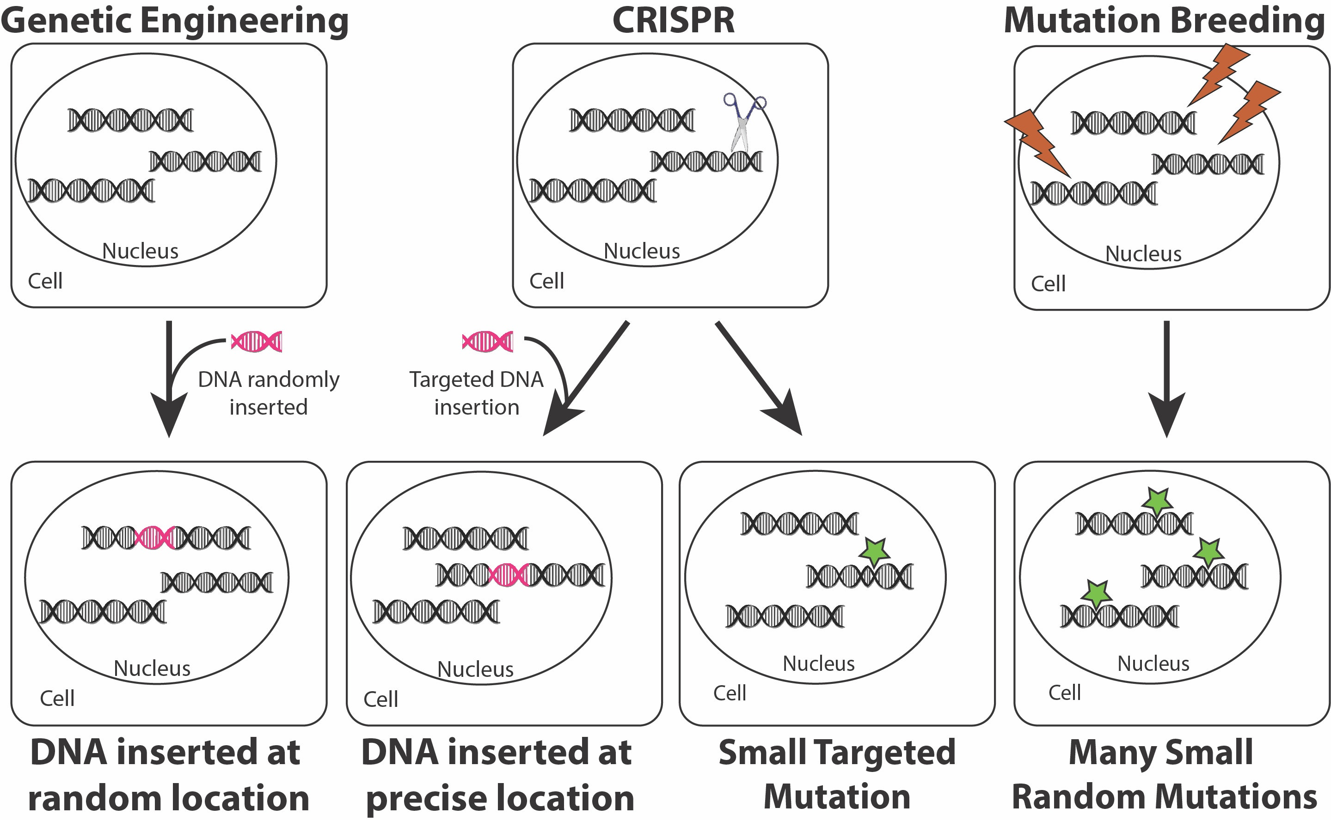 CRISPR Diagram | IFIS Publishing