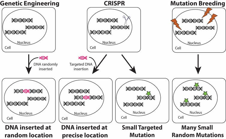 CRISPR Diagram | IFIS Publishing