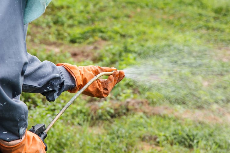 it's very unlikely Roundup causes cancer