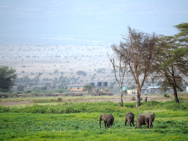file 20181008 72130 cdpznl.JPG?ixlib=rb 1.1 - Are electric fences really the best way to solve human-elephant land conflicts?