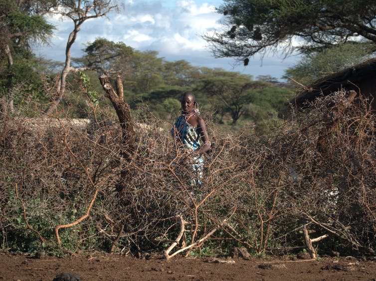 file 20181008 72127 1w4lfy6.jpg?ixlib=rb 1.1 - Are electric fences really the best way to solve human-elephant land conflicts?