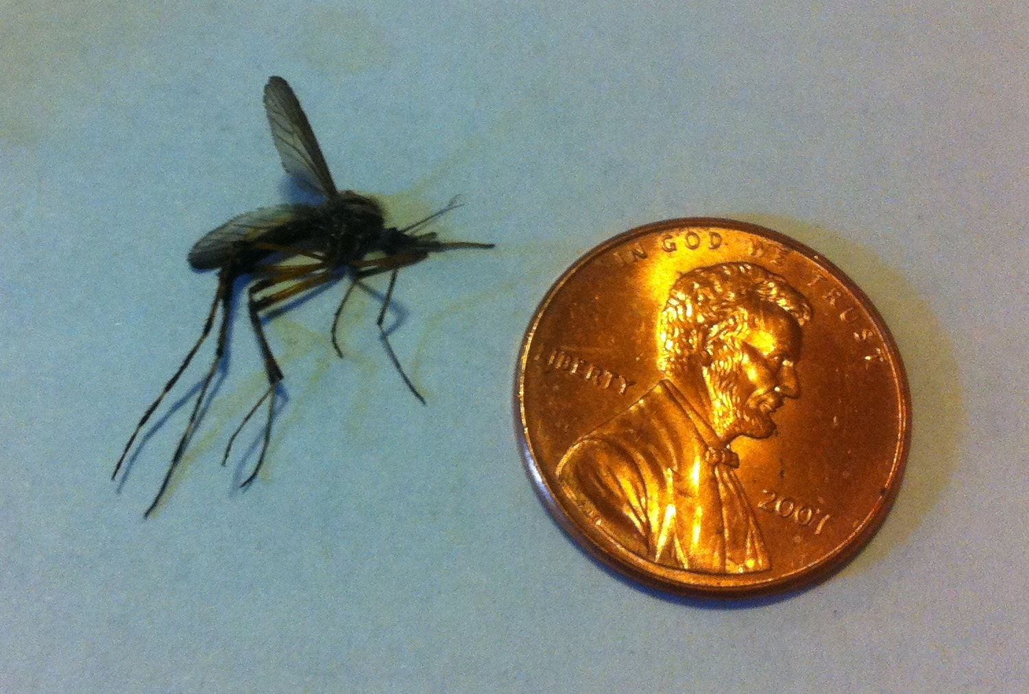 Giant mosquitoes flourish in floodwaters that hurricanes leave behind
