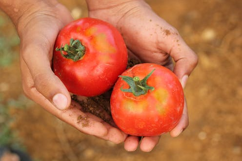 Tweaking just a few genes in wild plants can create new food crops