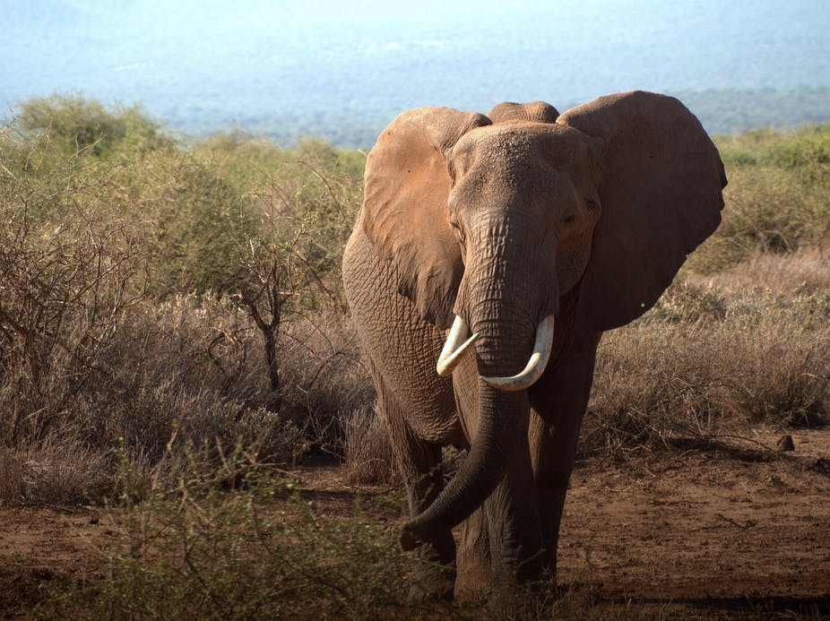 are electric fences really the best way to solve human elephant land