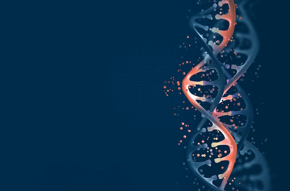 36ef45479320 Determining the structure of the DNA was the beginning of the gene therapy  journey. from shutterstock.com