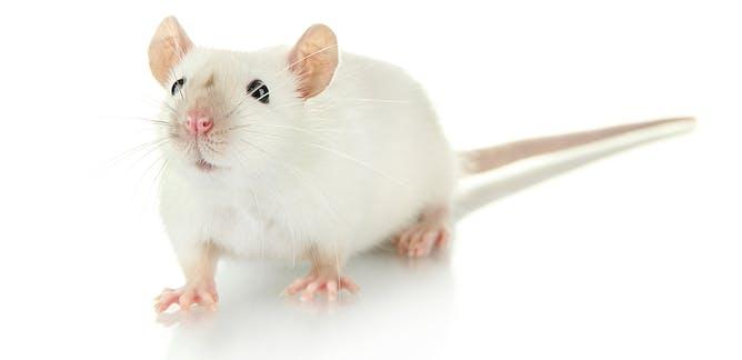 animal testing articles
