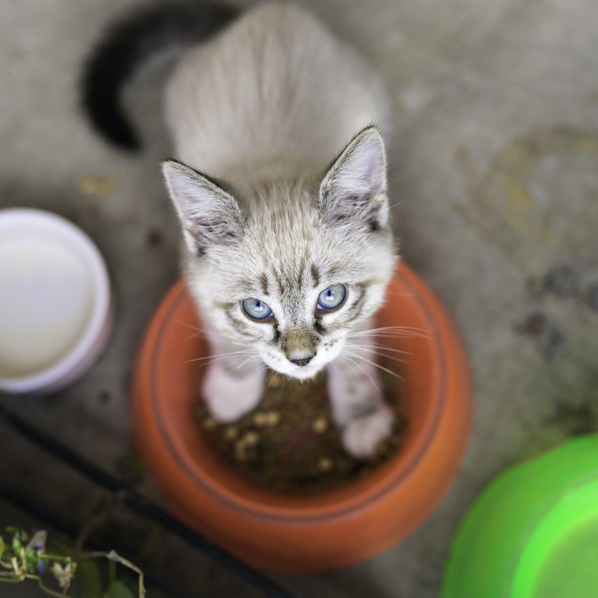 Senate inquiry calls for tougher rules on pet food in Australia