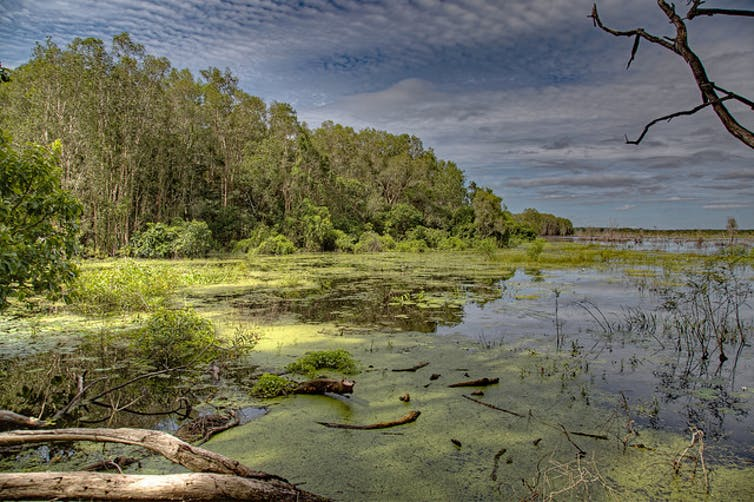 Why a wetland might not be wet