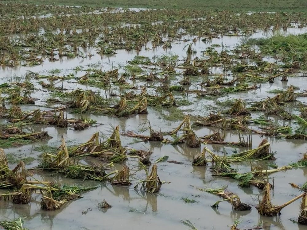 world hunger has risen for three straight years and climate change  crop damage on puerto rico from hurricane maria oct   puerto rico  department of agriculture