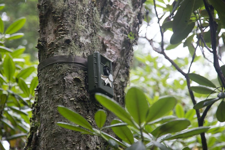 Camera traps designed for animals are now invading human privacy