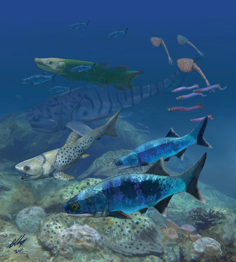 Ancient fish evolved in shallow seas – the very places humans threaten today