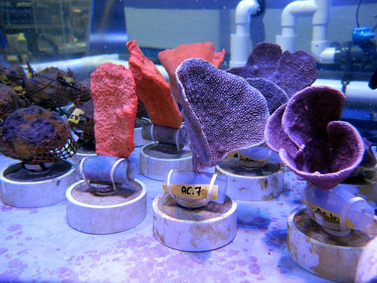 The rise of sponges in Anthropocene reef ecosystems