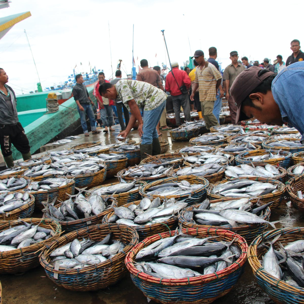 fishIDER, a new tool to improve fisheries management in Indonesia