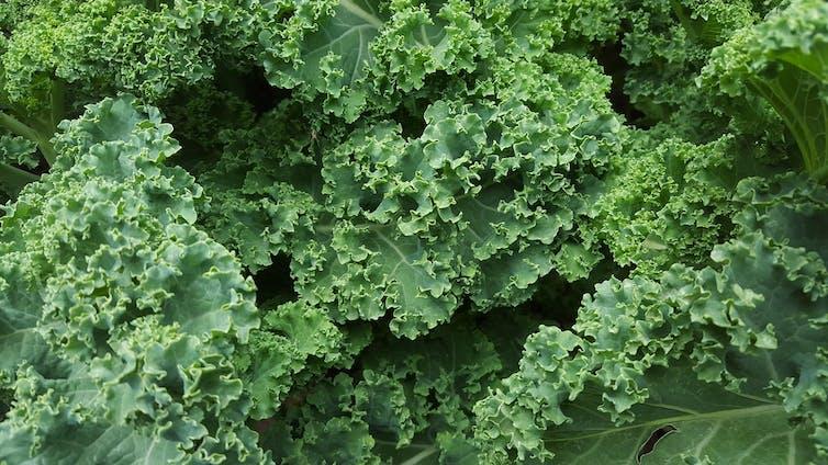 Quinoa Kale Chía Goji Detrás De Los Superalimentos Solo Hay Marketing
