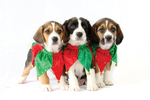 Yes, you can adopt a pet as a Christmas gift – so long as