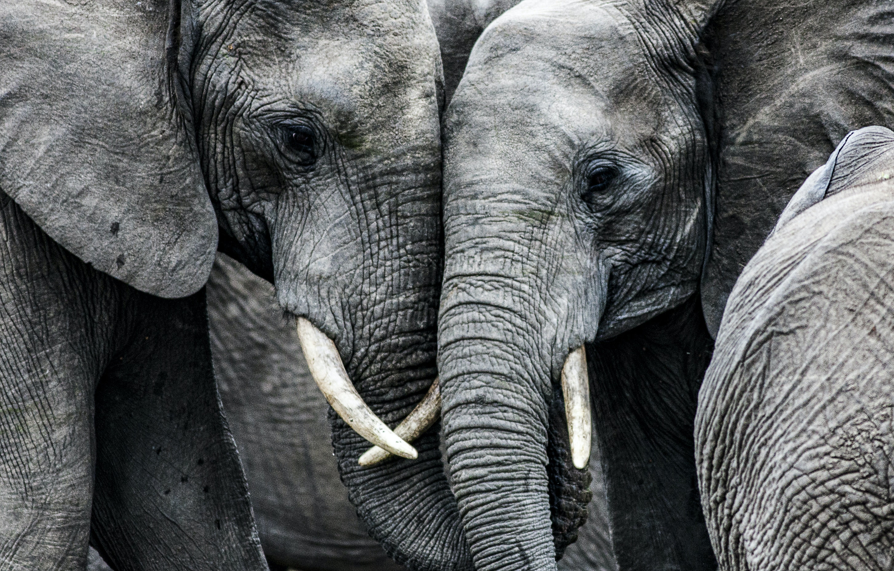 African elephants in literature -- lessons in exploitation and compassion