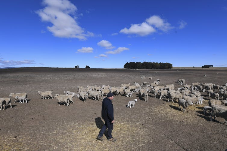 Better data would help crack the drought insurance problem