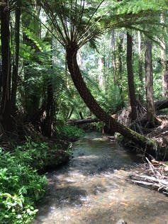 69 pharmaceuticals found in invertebrates living in Melbourne's streams