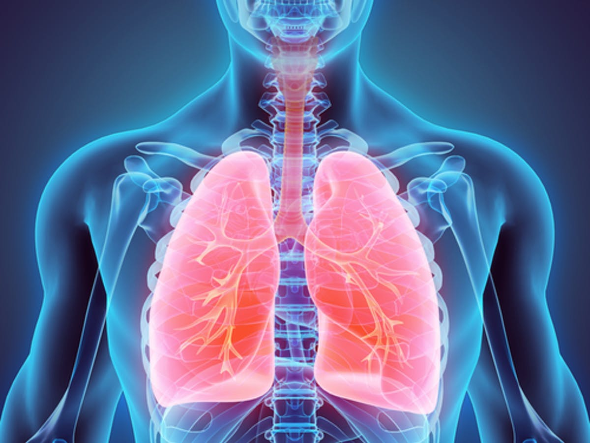 Your lungs are really amazing. An anatomy professor explains why
