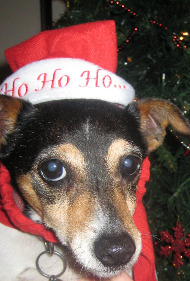 Yes, you can adopt a pet as a Christmas gift – so long as you do it correctly