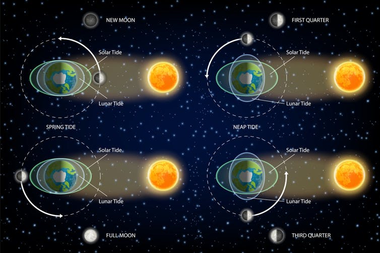 How does the Moon, being so far away, affect the tides on Earth?