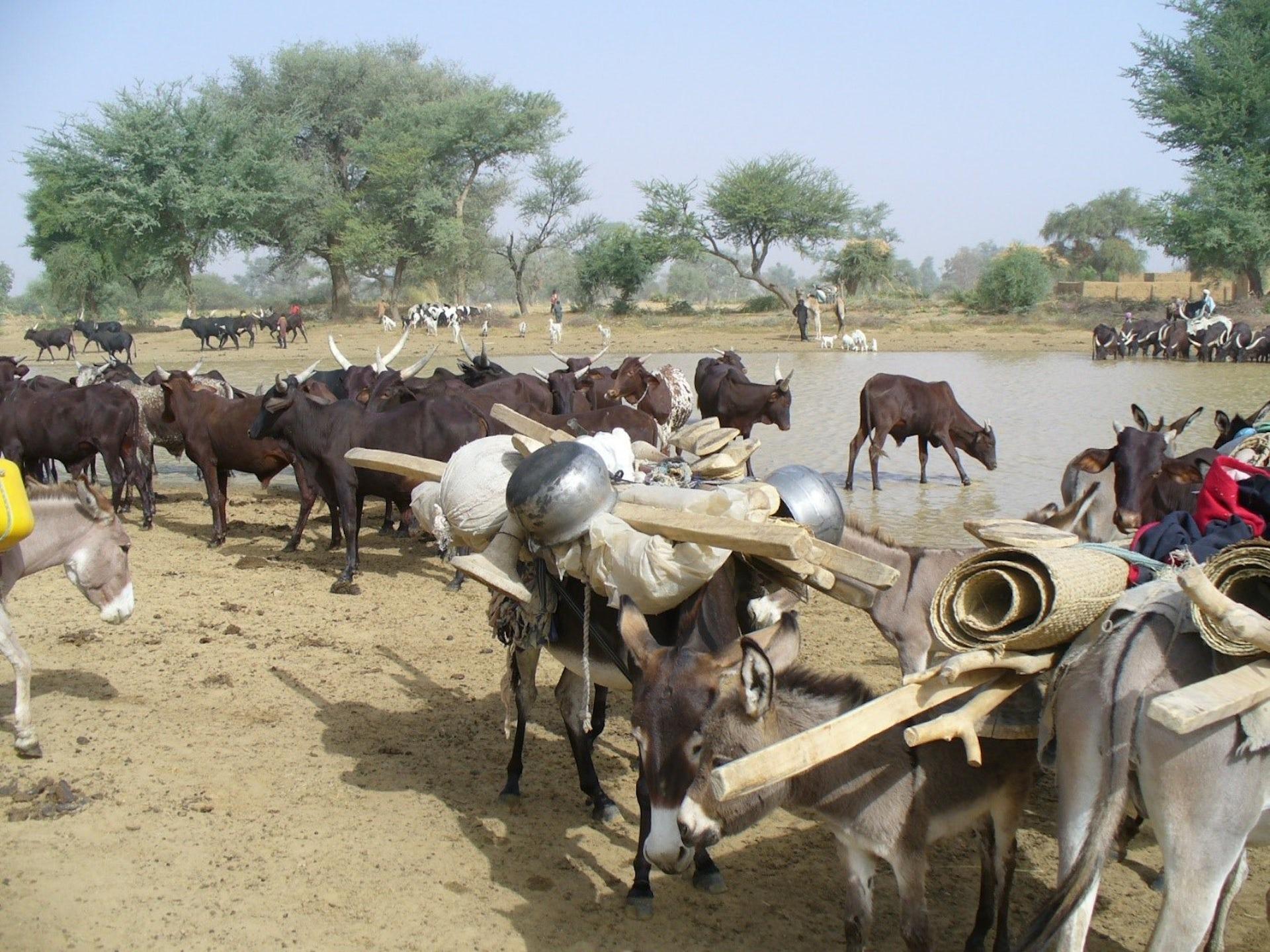 Au Sahel, maintenir l'élevage pastoral pour s'adapter au changement climatique
