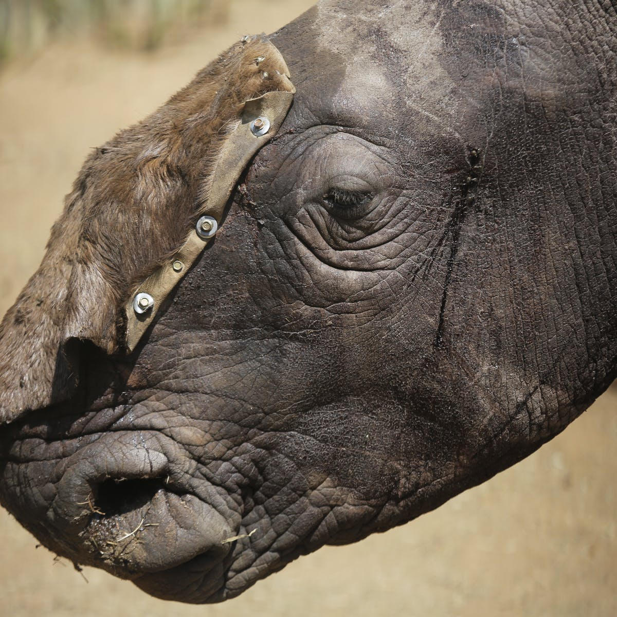 legalisation of rhino horn trade