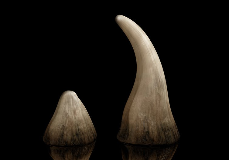 China's legalisation of rhino horn trade: disaster or opportunity?