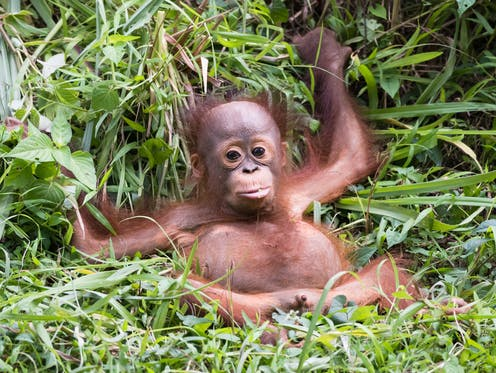 Palm oil boycott could actually increase deforestation