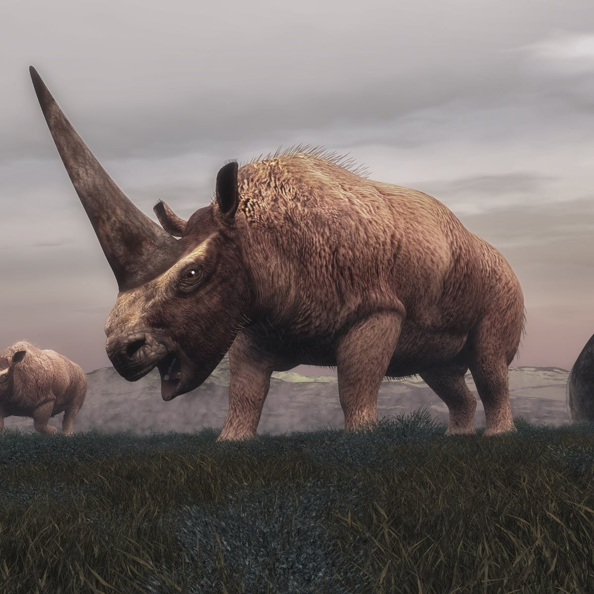 How A Change In Climate Wiped Out The Siberian Unicorn