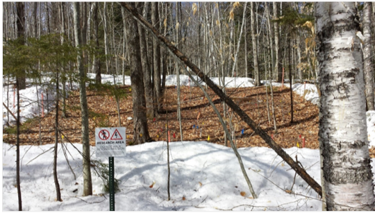 Research plot at Hubbard Brook Experimental Forest with a rectangular area of snowpack cleared.