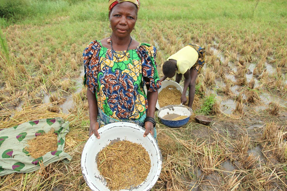 Why Nigeria should first support rice farmers before it cuts