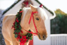 a horse in red flower necklace