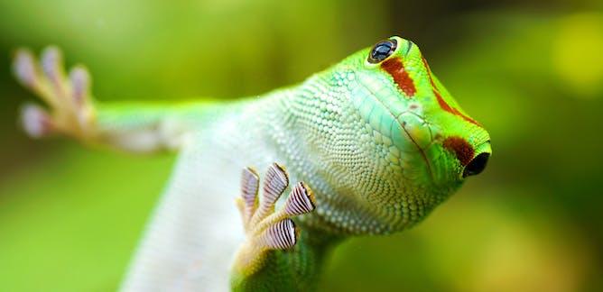 Image result for Biomimetics