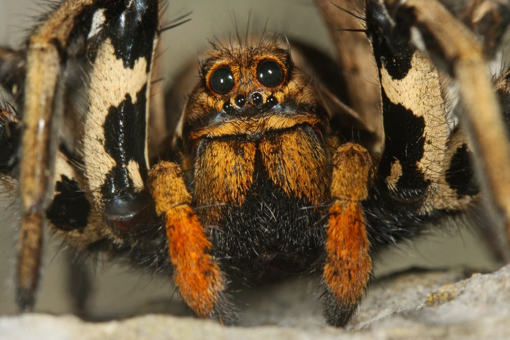 a3881882d3 The Weather Network - Afraid of spiders? This might help