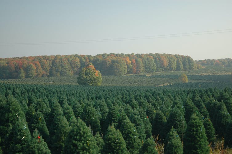 Are Artificial Christmas Trees Better For The Environment Than Real