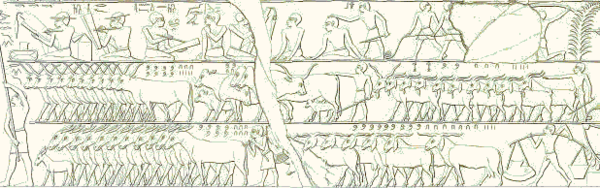 This scene depicts a cattle count (copied by the Egyptologist Lepsius). In the middle register we see 835 horned cattle on the left, right behind them are some 220 animals and on the right 2,235 goats. In the bottom register we see 760 donkeys on the left and 974 goats on the right. Credit: Wikimedia commons, CC BY