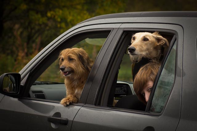 is it true dogs don't like to travel?