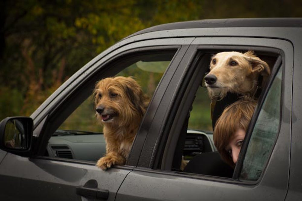 Curious Kids: is it true dogs don't like to travel?