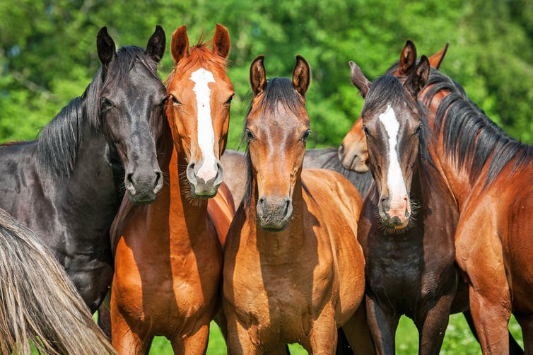 Is your horse normal? Now there's an app for that