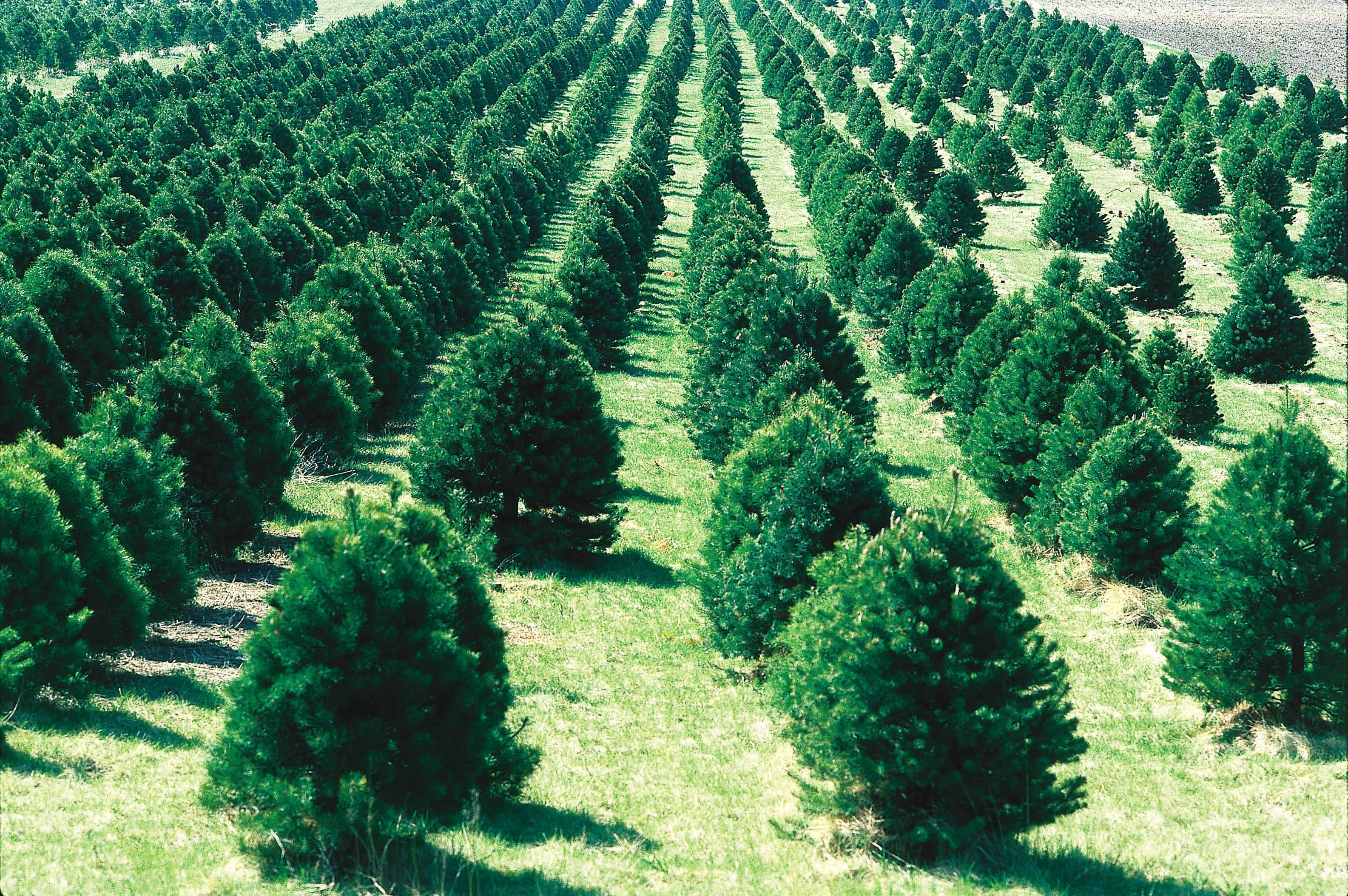 Dreaming of a green Christmas? Here are five ways to make it more sustainable