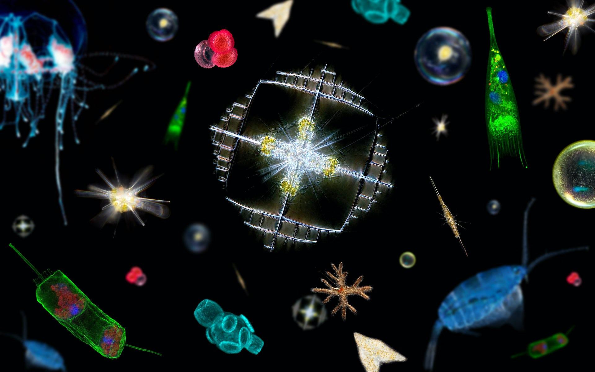 """Les science """"omiques"""" ? Du nouveau pour la biologie moléculaire et pour la planète"""