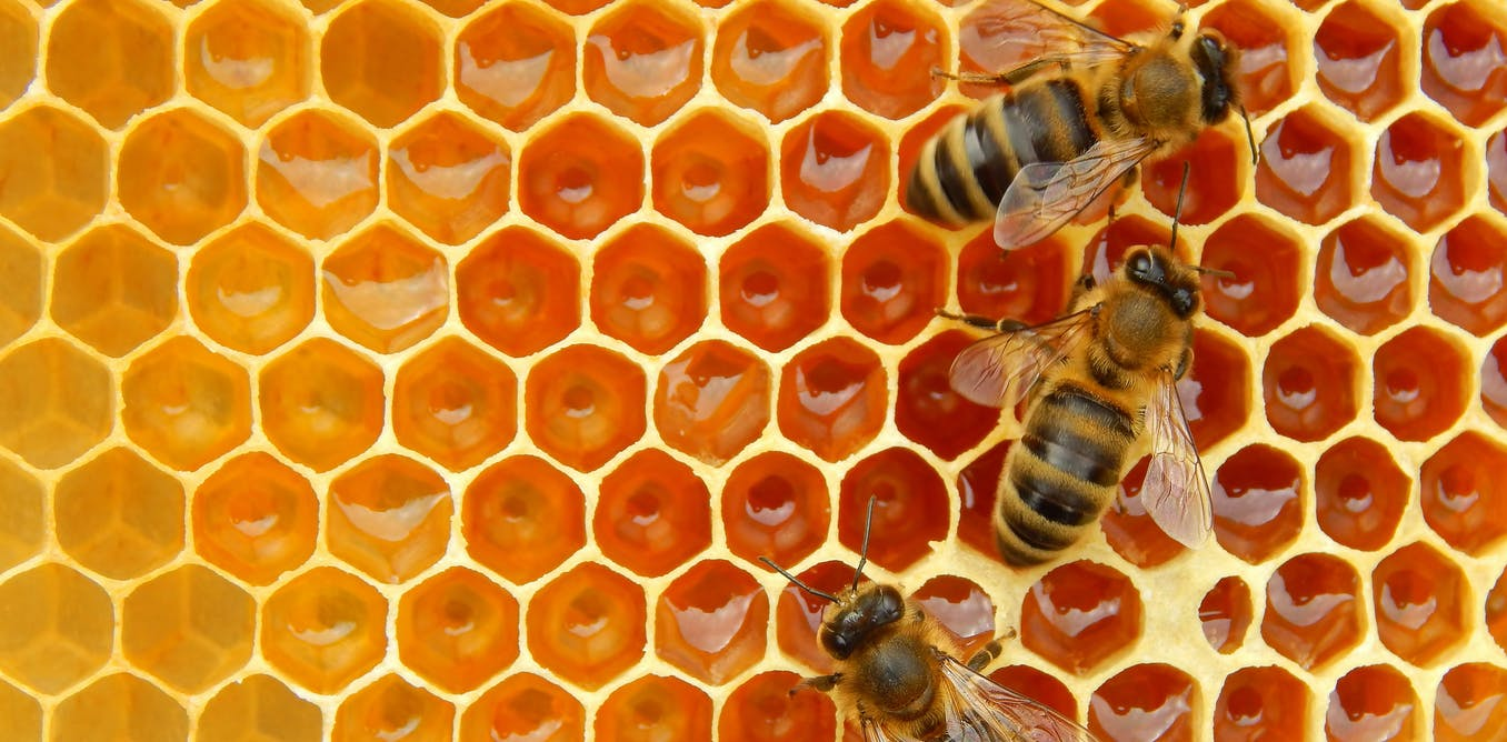 Could Team New Zealand Help Us Innovate In Education: We Discovered More About The Honeybee 'wake-up Call'